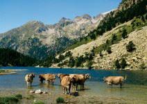 Excursión Parque Nacional Aigüestortes (1/2 jornada)