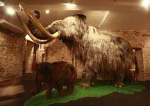 Museo del mamut (1h30)