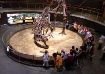 Visita didáctica Museo del Jurásico de Asturias (MUJA)