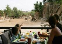 Almuerzo en Bioparc