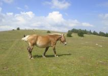 P5 - Dia 1: Llegada, Equitación y Ruta de Orientación