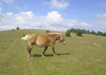 Dia 1 Llegada, Equitación y Ruta de Orientación