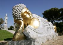 P5: Paquete Aventura - Día 5: Visita a Buddha Eden, entrega de diplomas y regreso