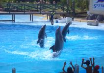 Visita a Selwo Marina Delfinarium (Apertura 23 de Marzo)