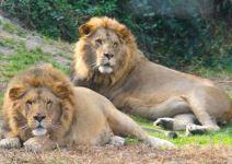 Visita a Selwo Aventura + Serengueti (Jornada Completa)
