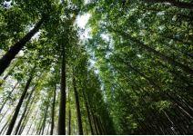 P5.2-Día 1: Presentación y Actividades medioambientales