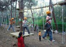 Parque de árboles (1/2 jornada) Primaria, Secundaria y Bachillerato