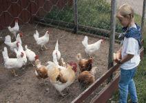P4 - (NA) Día 2: Visita animales de la Granja, Paseo en tractor y Tirolina