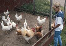 P3 - (NA) Día 2: Visita animales de la Granja, Paseo en tractor y Tirolina