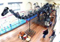 Museo de Ciencias Naturales (1-2 horas)