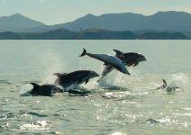 """Ruta de los """"Golfinhos"""" (Setúbal) - Media Jornada (A partir de Mayo)"""