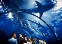 Aquarium de Barcelona (1h 30 min.)