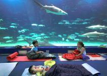 Duerme en el Oceanogràfic
