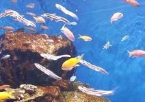 Ciudad de las Artes y las Ciencias: Oceanografico con Visita zona técnica + Hemisferic + Museo de las Ciencias