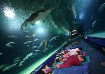 Dormir entre tiburones y otros animales del océano.