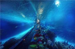 Experiencia única en Valencia: Oceanografic, náutica y Terra Mítica