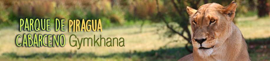 Viaje fin de curso a Cantabria para Primaria