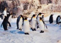 Duerme con pingüinos en Faunia