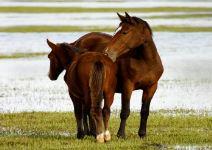 Visita del Parque de Doñana (4 horas) - A partir de 14 años