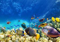 Una noche en el Arrecife + Oceanografic