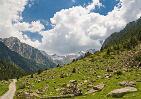 Boi Taull Montaña del Pirineo