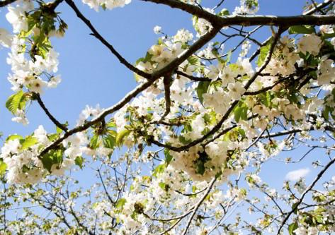 Flores en de un árbol en caceres