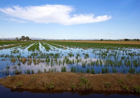 Marisma del Delta del Ebro