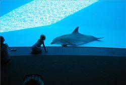 Alumno observandno a delfin en el Delfinario