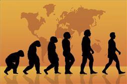 La evolución humana en burgos